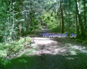 Teutoburgerwald Bild